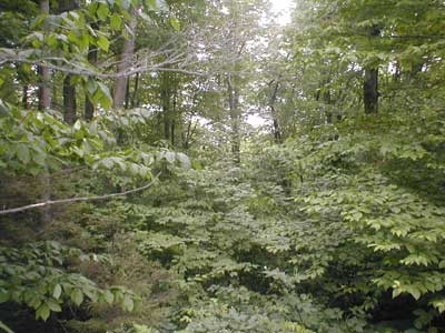view of woodlot